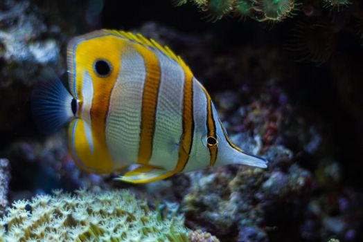 Tropical Fish 11 by CastleGraphics