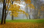 Misty Autumn... _9_ by my-shots