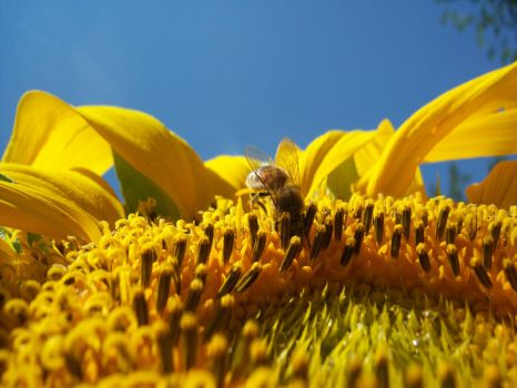 Just Keep Buzzing by YvieStockPhotography