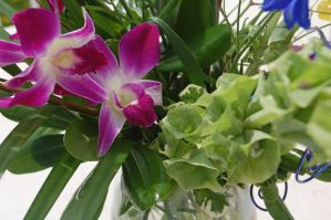 Stock 380 - Orchid by pink-stock