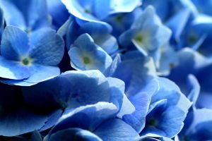 So blue by vfrrich