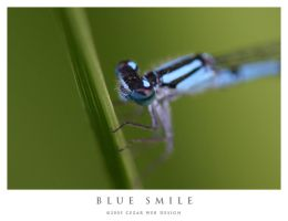 Blue Smile by cezars
