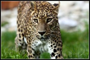 Green-eyed poser by AF--Photography