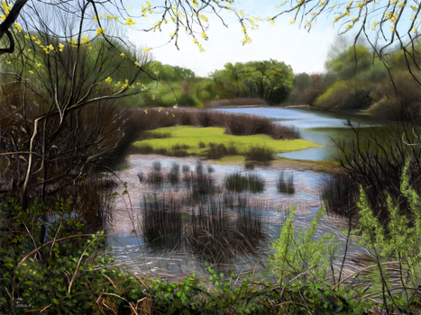 Consumnes River Preserve by abyss1956