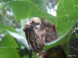 Spider ,little spider by angiearias