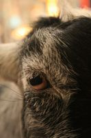 Into The Eye Of A Goat by FrancesColt