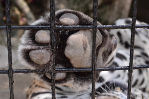 :Let Me Out: by PrePAWSterous