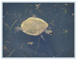 Turtle Urtle by technologicallyinept