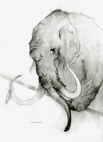 Elefant by UrukkiSaki