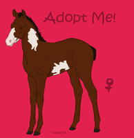 FoalAdoptable3 by ReeseS8