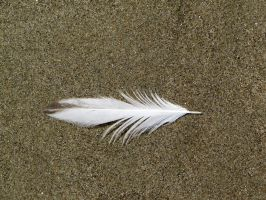 Feather 3 -- Sept 2009 by pricecw-stock