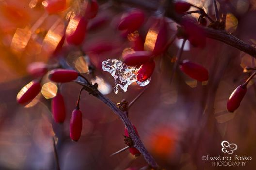 :.Barberry:. by efeline