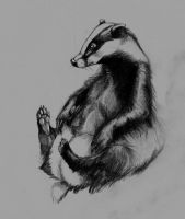 Badger by Catsuro