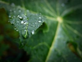 Waterdrops by brightstyle