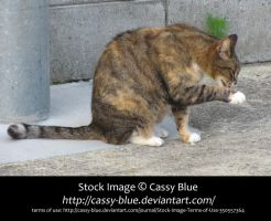 Cat Stock 2 by Cassy-Blue