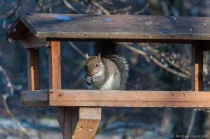 Squirrel eating by AndreaMetallurgico