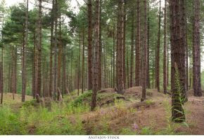 Forest 72 by AnitaJoy-Stock