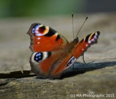 Butterfly on tree by MA-PHOTOGRAPHIC