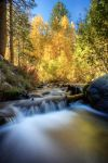 Galena Creek, NV Fall Color by sellsworth