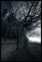 Tear of tree by zardo