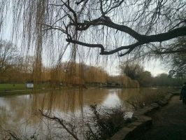Willow over the river by HannahLynn143