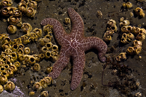 Starfish 3 by Alegion-stock