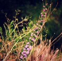 and among the weeds there is beauty by fotomademoiselle