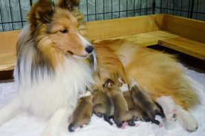Blaire and her babies... by HiddenParadise1
