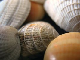 Sea Shell Details III by brandychristine1987