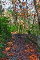 Pathway 3 by MoonShadowPhoto