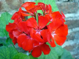 Malbon red flower by Naynee75