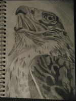 Ferruginous Hawk Sketch by AngelWolfSpirit