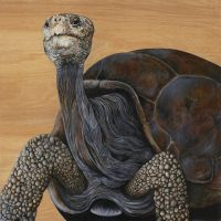 'Lonesome George' by skeegoedhart