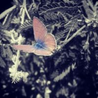Morning Butterfly by SmartFoneFotographer