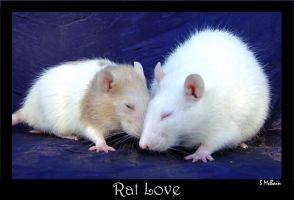 Rat Love by JumpingPeanuts
