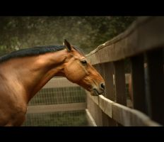 My Sonata In Color by PixleAteIt