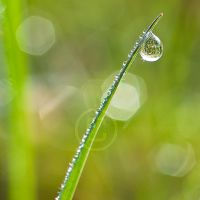 Dewdrop by eyedesign