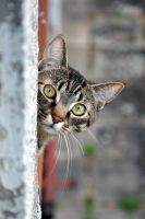 Cat next door by tomsumartin