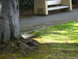 De Anza Secrets: root by AmaltheaTwin