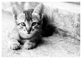 Kitty in Black and White by ivanlee