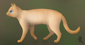 Ginger cat by Lizandre
