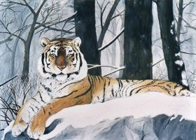 Snow Tiger by tabalon
