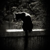 cat by anjelicek