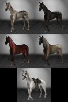 Red Dead Redemption 4 horses and Unicorn by ArmachamCorp