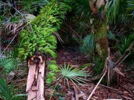 Florida Forest by TomFawls
