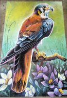 American Kestrel Chalk Art by charfade