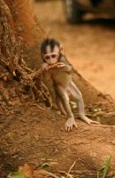 Ickle Baby Monkey by spacedoutkat