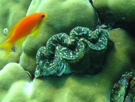 Anthillas and Giant Clam by Cicciobello-BoBo