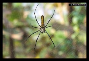 Spider Macro 01 by Knightmare-at-9