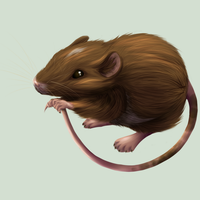 Mouse by TinTans